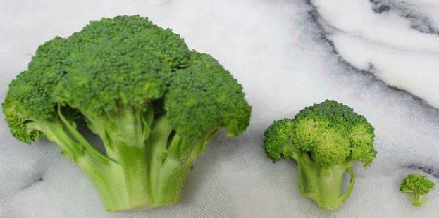 Brócolos.